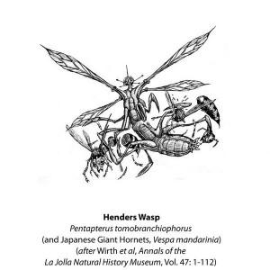Avispas de Henders